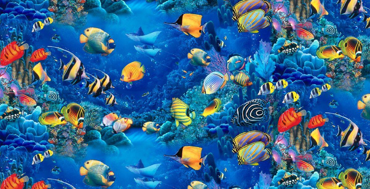 Im genes de peces for Sfondi animati pesci