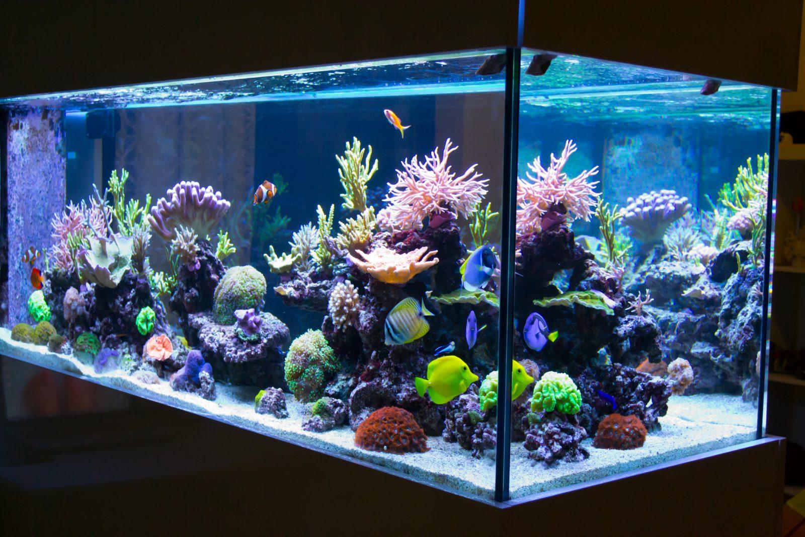 El mejor filtro de agua para acuario