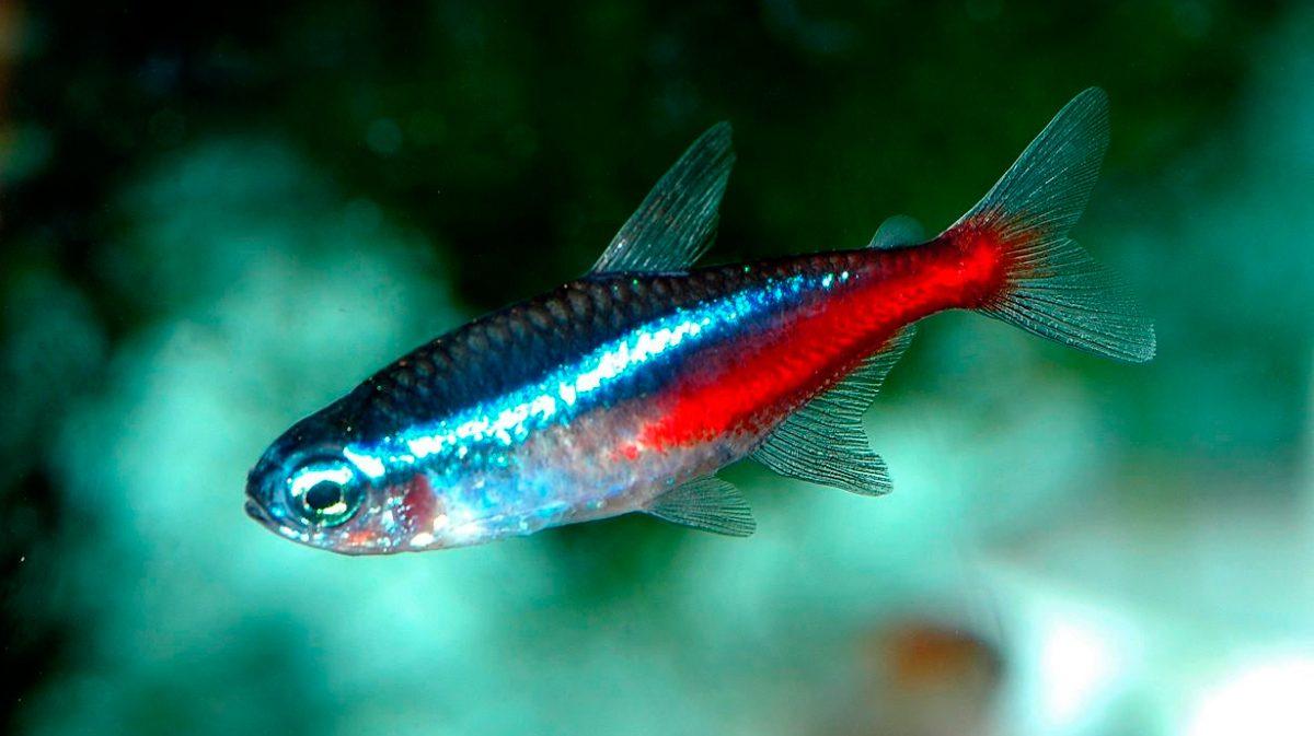 Pez ne n for Alimentacion para peces de acuario